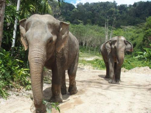 Thailand_7(1)